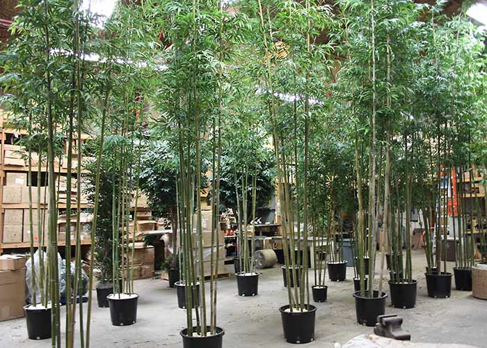 9 A Large Order Of 15 Ft Bamboo On Real Canes Being Constructed In Our Manufacturing Facility These Are Potted Grow Pots With Foam